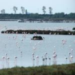 parco del delta del Po